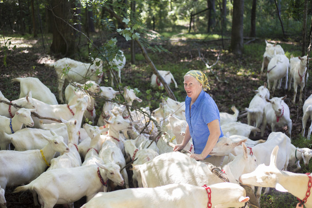 Mary Rigdon Hart with her goats on Decimal Place Farm