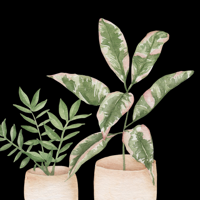 print of 2 houseplants by laurel cabrera