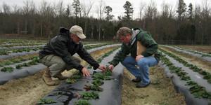 Eastern Carolina Organics