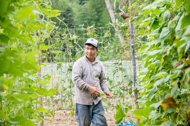 a farmer harvesting green beans